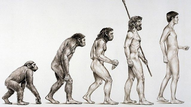 640x360 The Missing Links Of Human Evolution Are More Than Missing They