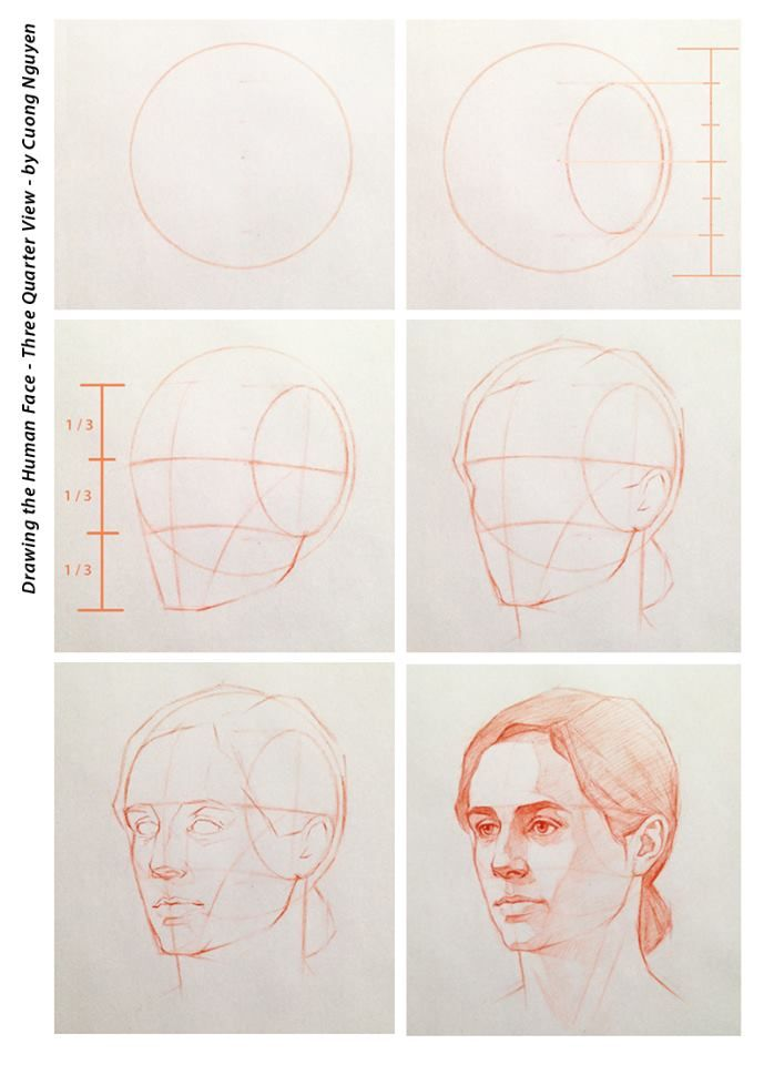 698x960 Drawing The Human Face