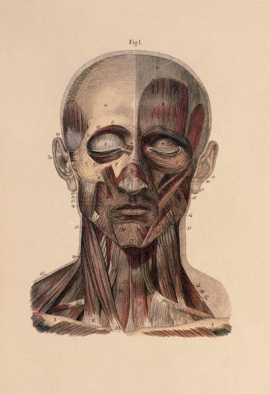 Human Head Anatomy Drawing At Getdrawings Free For Personal