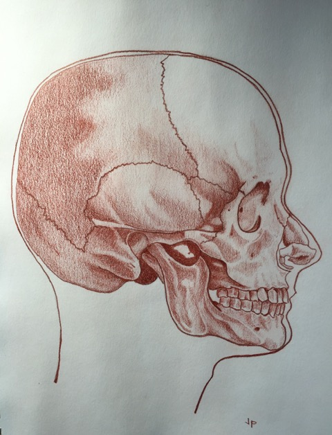 480x628 Anatomy Drawing Skills In Doctor's Practice