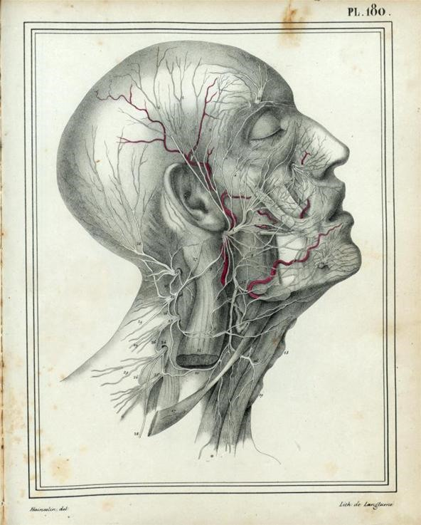 592x737 Dissecting A Human Head Through Anatomical Illustrations Science