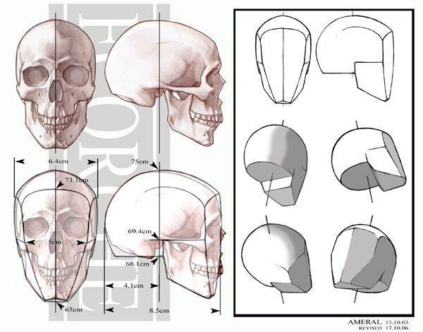 600x471 Anatomy Anatomy