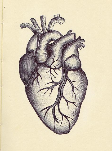 473x640 Anatomical Heart Drawing Ahd05 Tattoos Anatomical