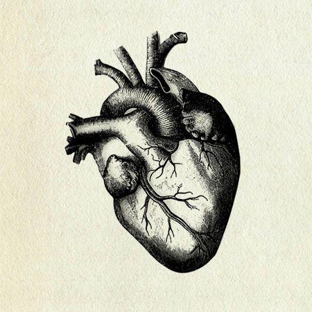 450x450 Photos Human Heart Sketches,