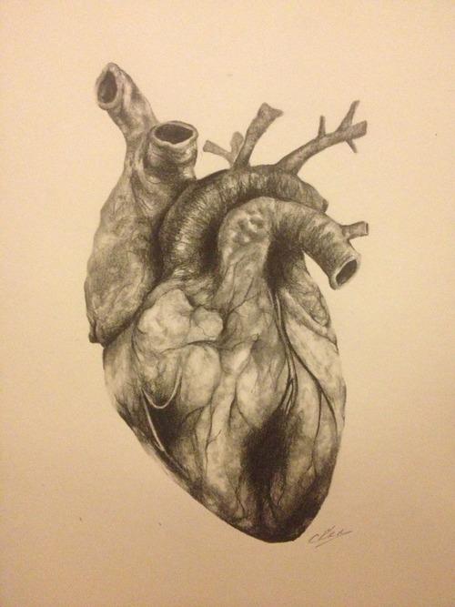 500x667 Drawing The Heart Human Heart, Anatomy And Heart Art