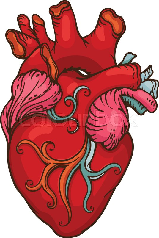 535x800 Drawing Of Stylized Human Heart. Outline Design Object Stock