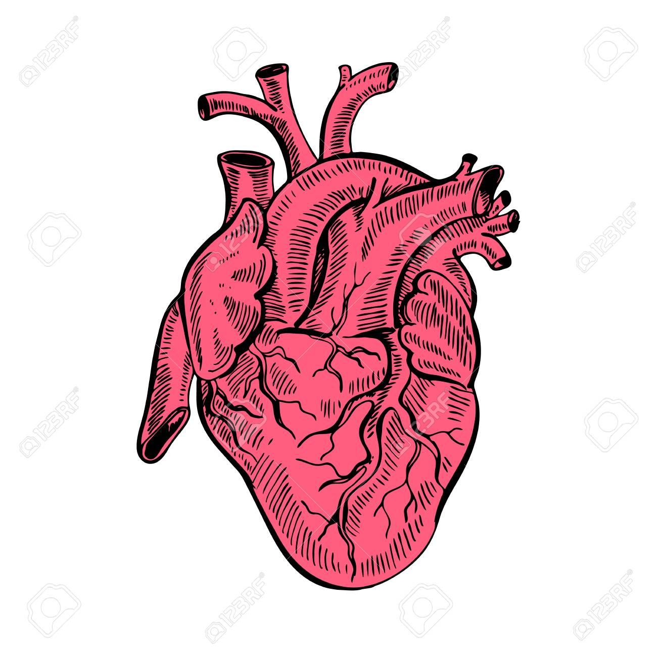 1300x1300 Hand Drawing Sketch Anatomical Heart.cartoon Style Vector