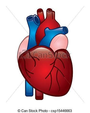 Human Heart Drawing at GetDrawings.com | Free for personal use Human ...