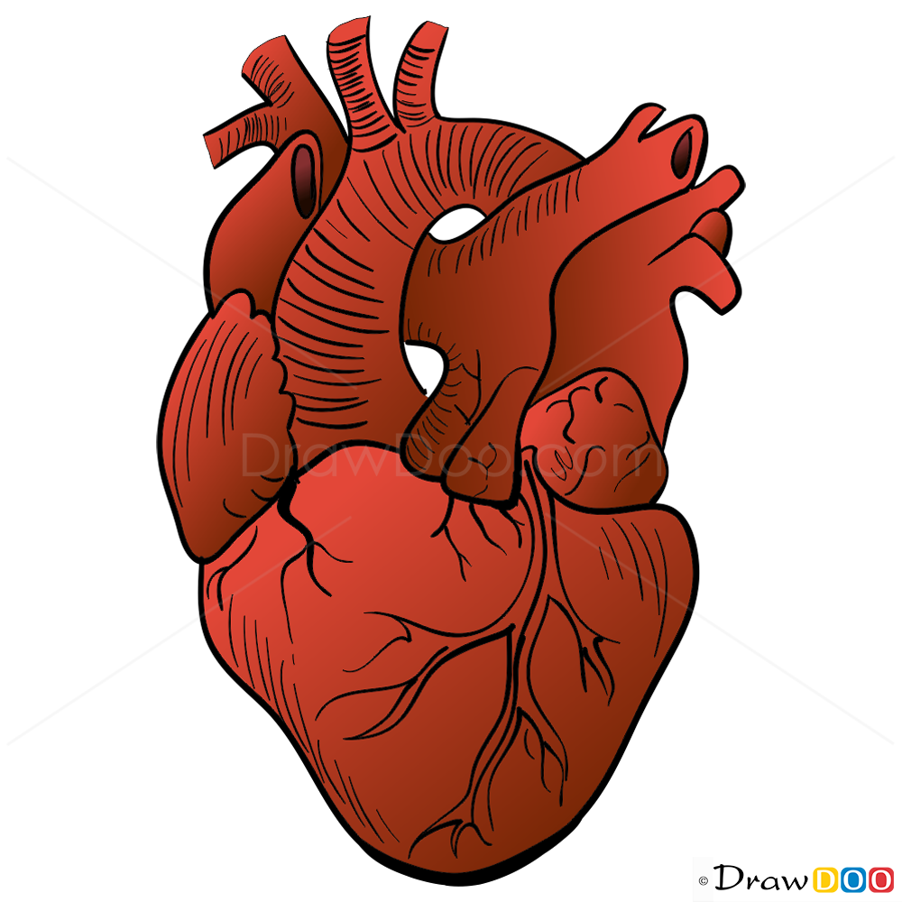 Human Heart Drawing Steps at GetDrawings.com   Free for personal use ...
