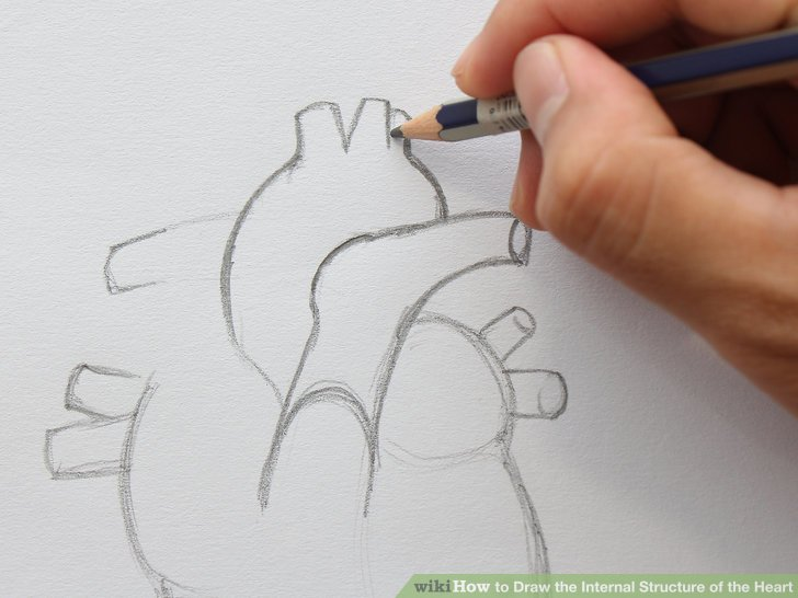 728x546 how to draw the internal structure of the heart with pictures