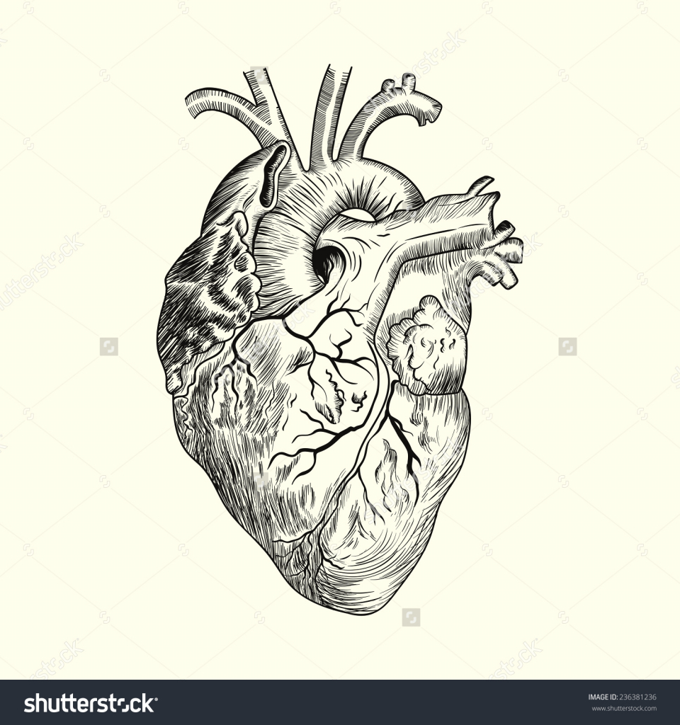 960x1024 Drawing Of A Human Heart