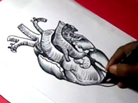 480x360 How To Human Heart Drawing For Kids Step By Step