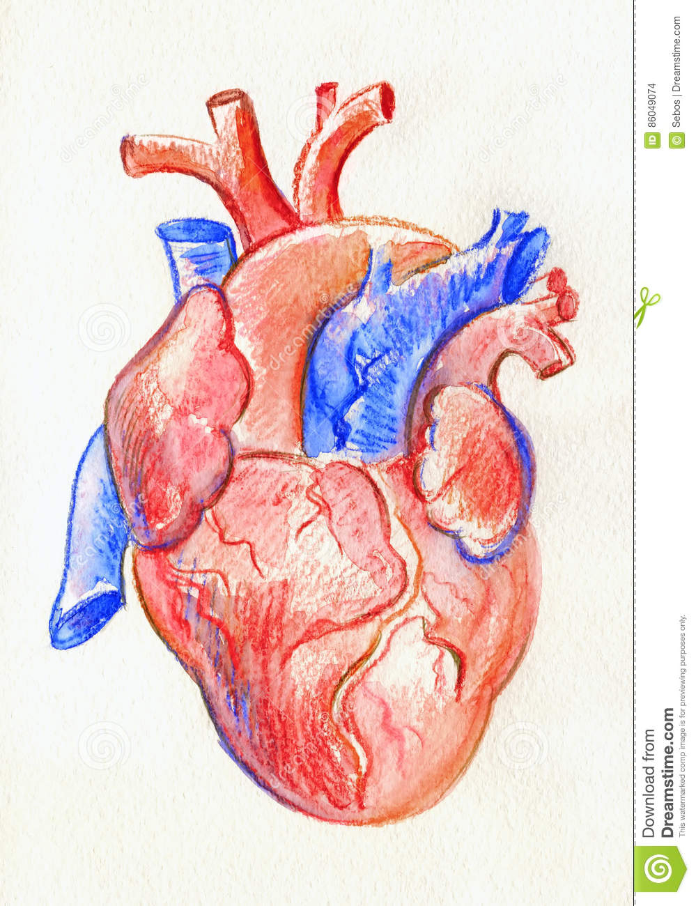 999x1300 Human Heart Sketch With Label Hand Drawing Sketch Anatomical Heart