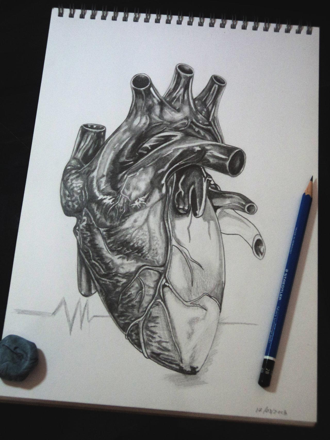1280x1707 Human Heart By Tubyx