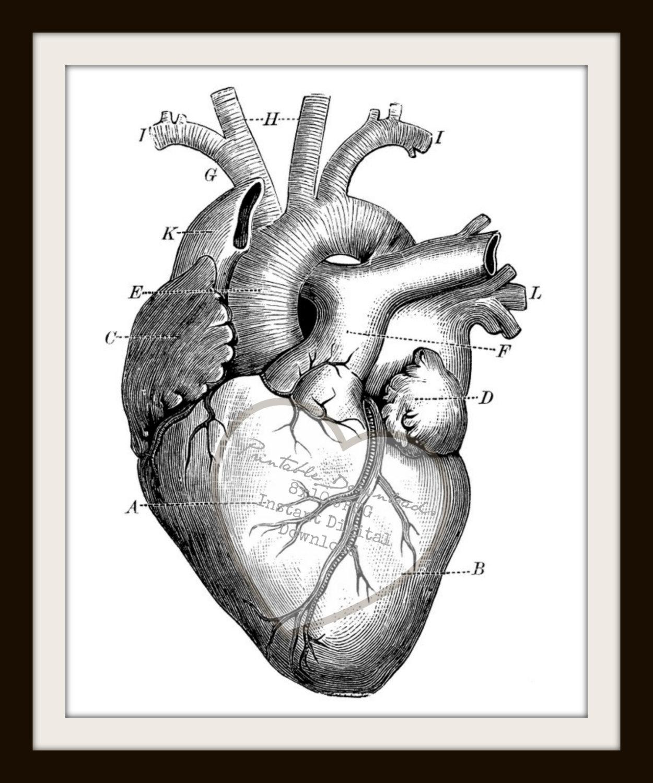 1250x1500 Pencil Drawing Of Human Heart Human Heart Sketch Diagram Free