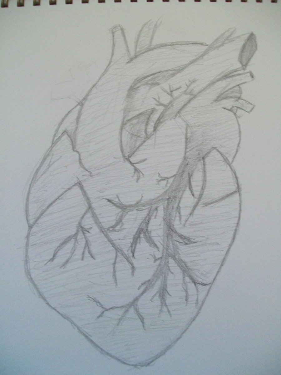 900x1200 Real Sketched Drawings Human Heart Sketch By Sushininjas