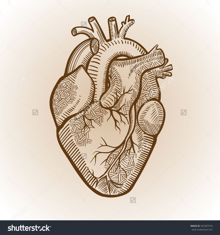 Human Heart Simple Drawing At Getdrawings Com Free For