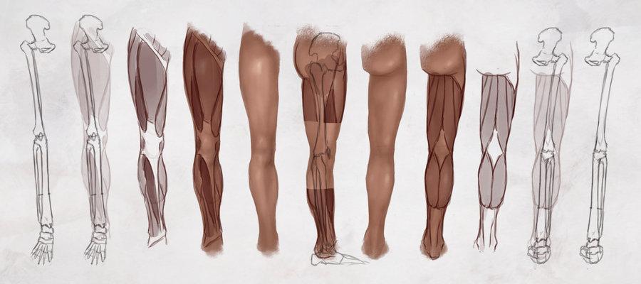 Human Leg Drawing at GetDrawings.com