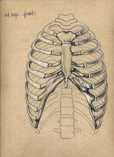 236x324 Rib Cage Drawing Inspiration. Rib Cage, Anatomy