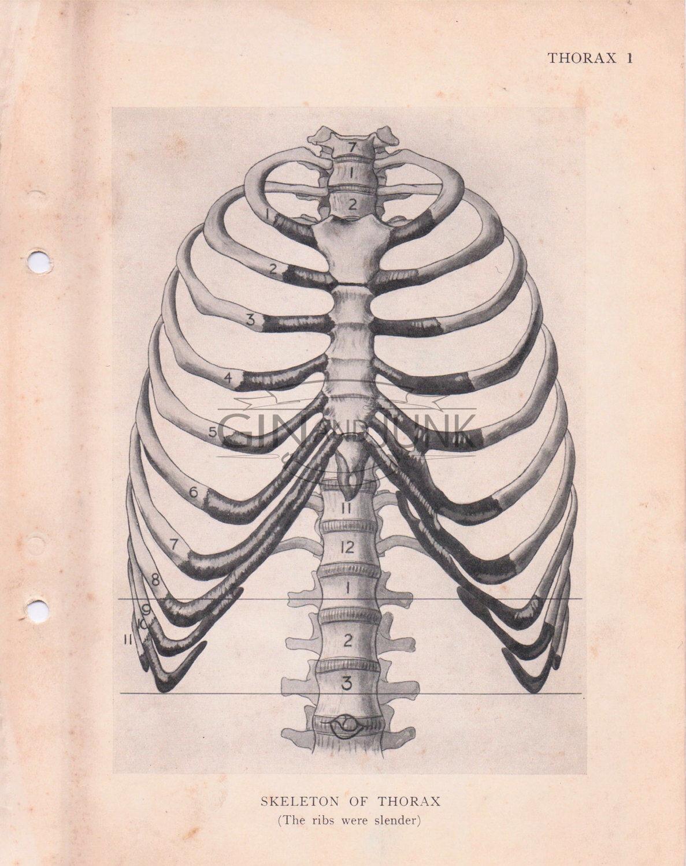 1187x1500 Vintage Medical Drawing