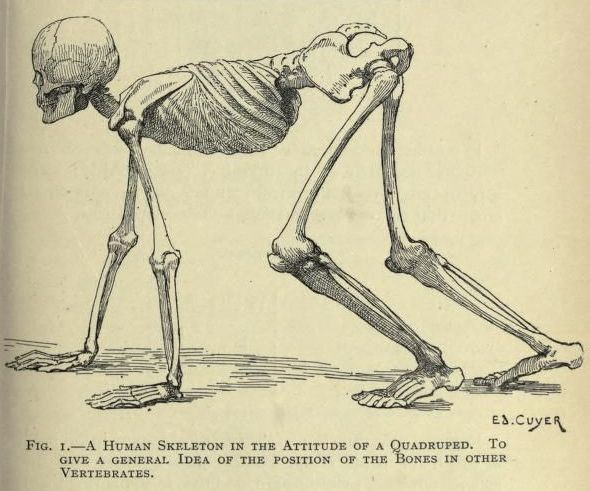 590x491 9 Best Skeletons For Drawing Images On Human Skeleton