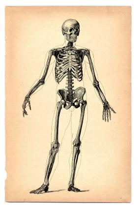 281x427 Human Skeleton (Drawing On Vintage Paper) Vintage Paper
