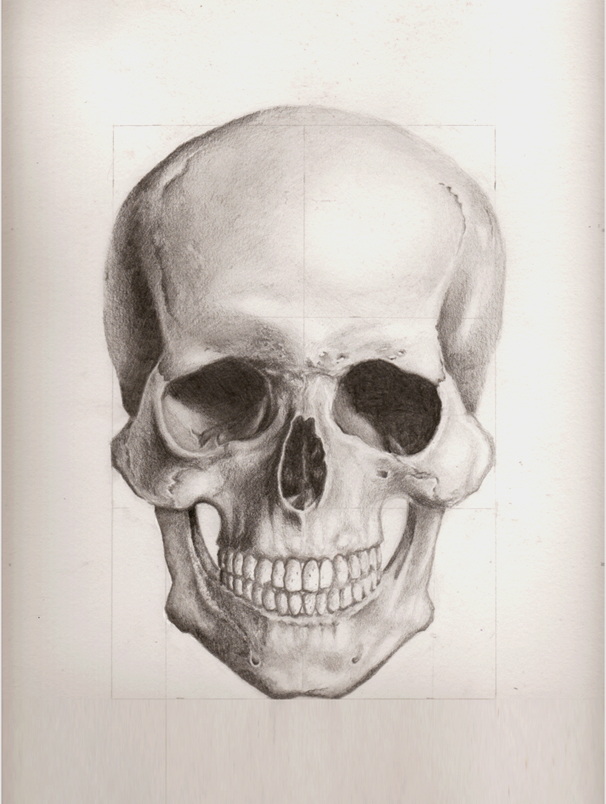 606x804 Human Skull Front View By Enonemis1