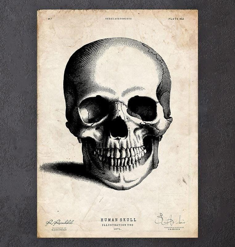 762x800 Human Skull Drawing