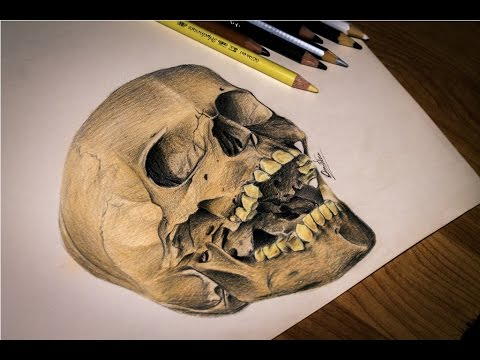 480x360 Human Skull Drawing Hd