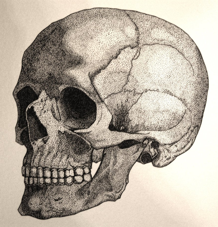 875x912 Pen And Ink Human Skull By Shintosun
