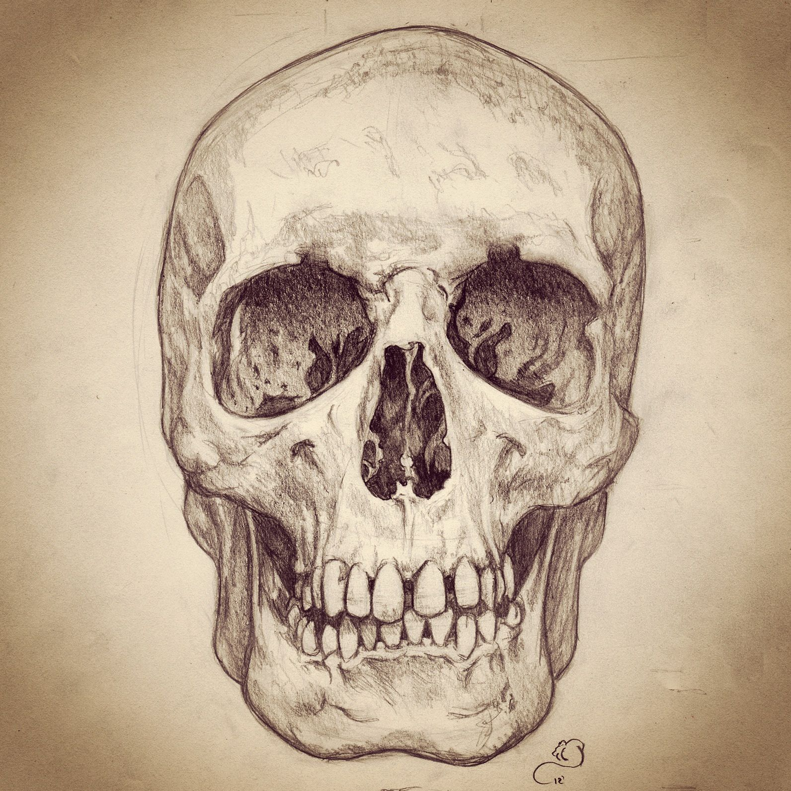 1592x1592 Pencil Sketch Of Human Skull Skulls Human Skull