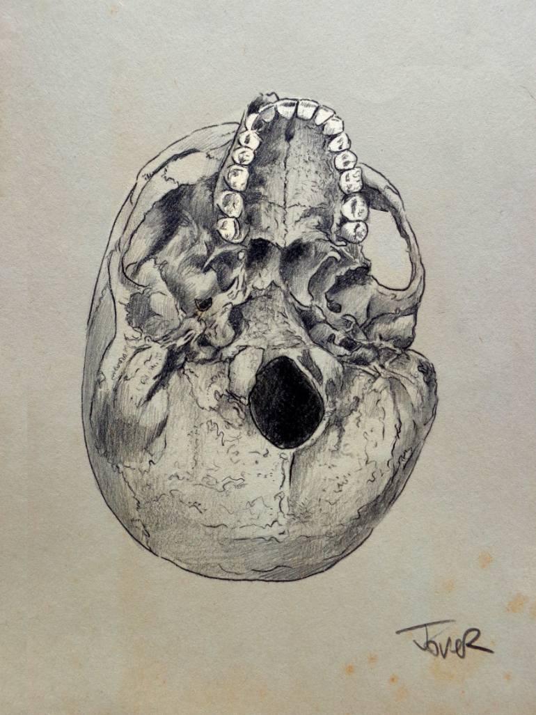 770x1027 Saatchi Art Cranium (Study Of The Underside Of The Human Skull