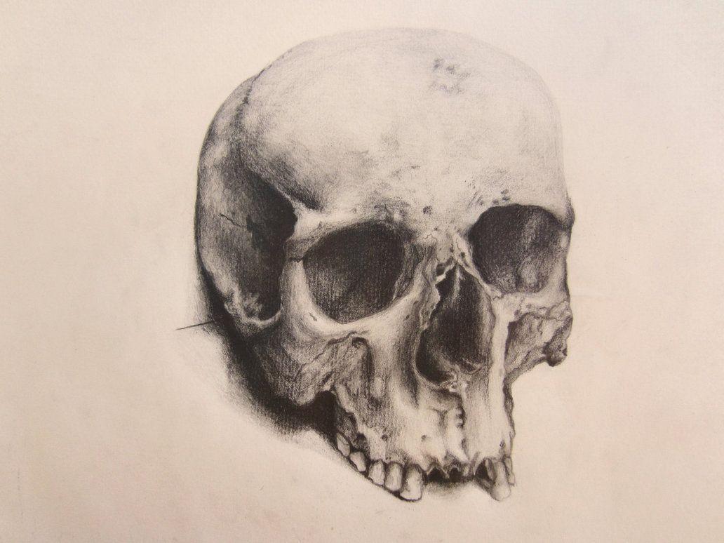 1032x774 Human Skull Human Skull By Backhendl On Skeleton