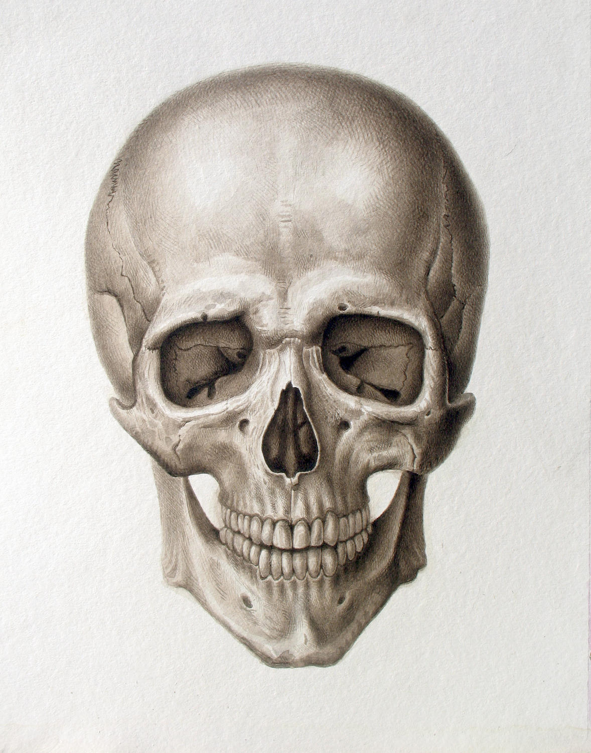 Human Skull Drawing Reference At Getdrawings Free For Personal