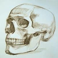 200x200 Speed Creation Of Human Skull