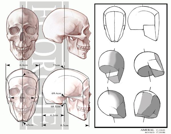 600x471 Anatomy