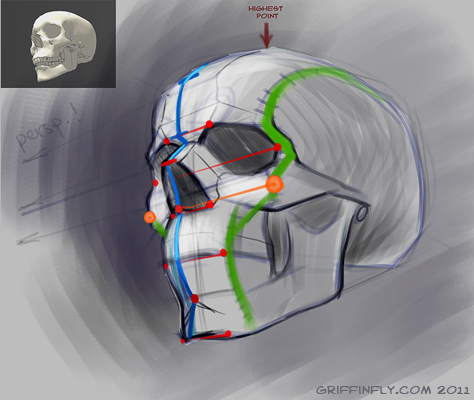 474x400 Human Skull