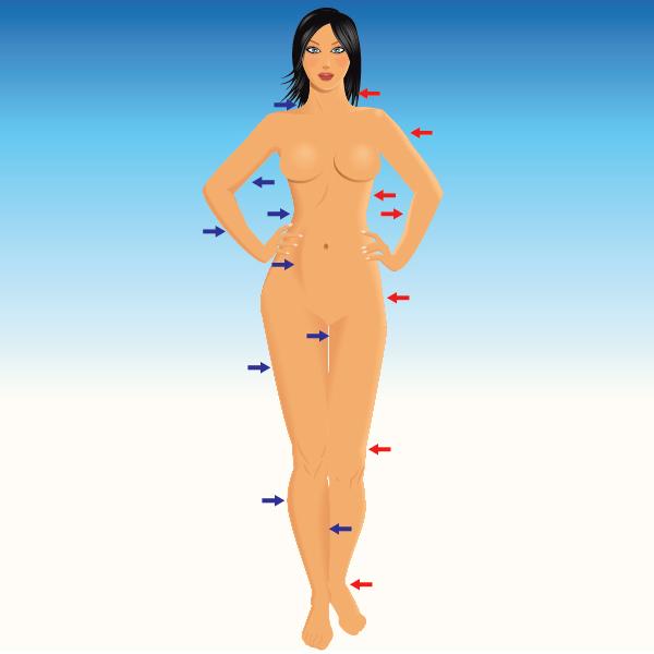 600x600 Modeling The Human Body In Adobe Illustrator