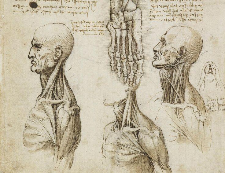 736x566 Leonardo Human Anatomy 57 Best Leonardo Da Vinci Images