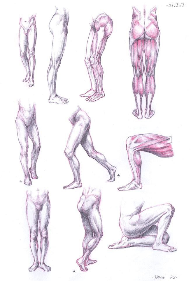 655x960 Studying Human Anatomy 25 Trending Anatomy Study Ideas