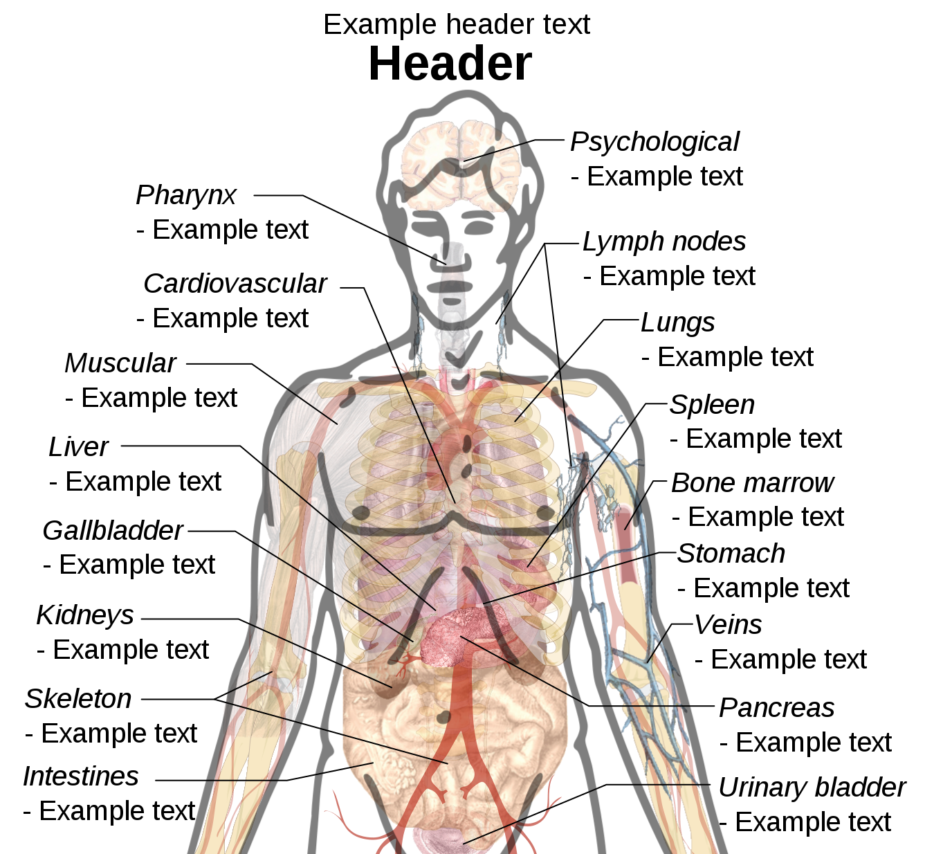 Humbody Organs Drawing At Free For Personal Use Full Body Muscle Diagram Anatomy Muscles Labeled 846x1024 Female Human 1363x1234 Fileadult Male Template Drawingsvg