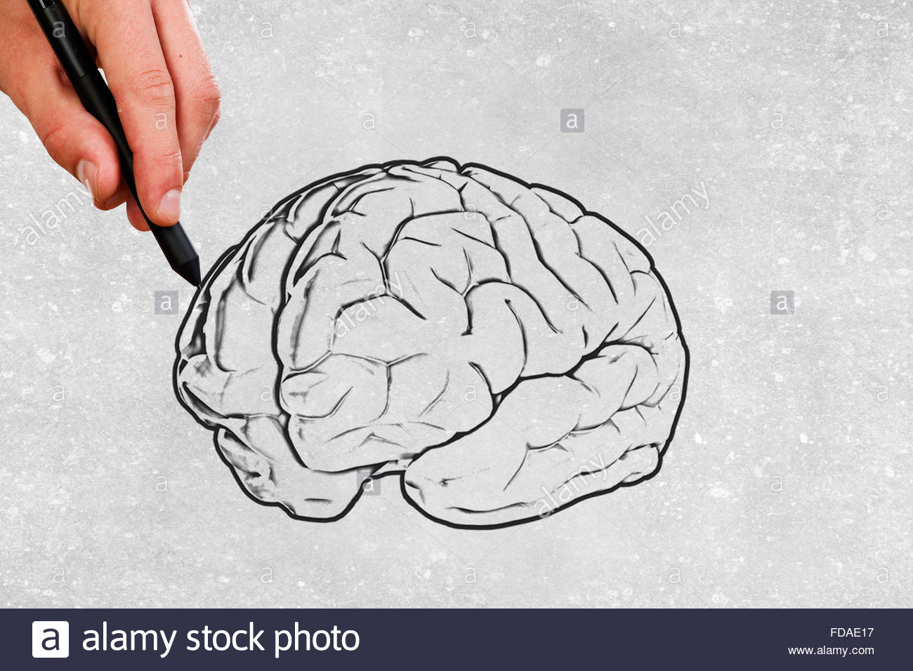 1300x956 Close Up Of Male Hand Drawing Human Brain Stock Photo 94272899