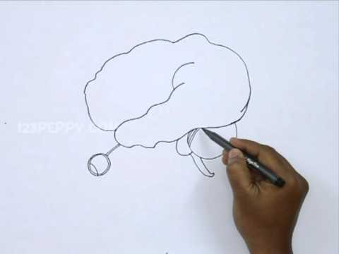 480x360 How To Draw A Human Brain
