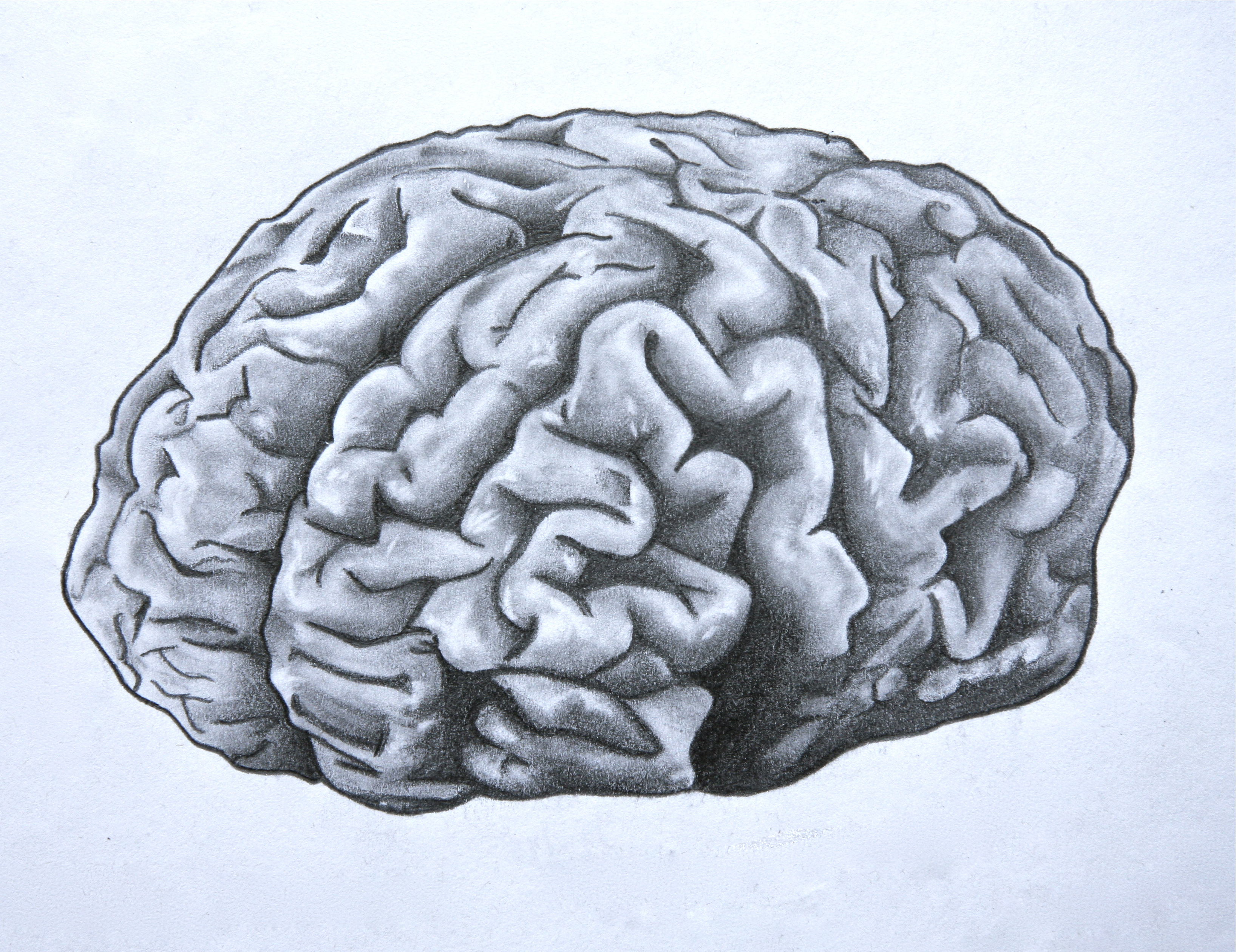 3272x2521 Simple Labeled Pencil Sketch Diagram Of Human Brain Drawn Brain