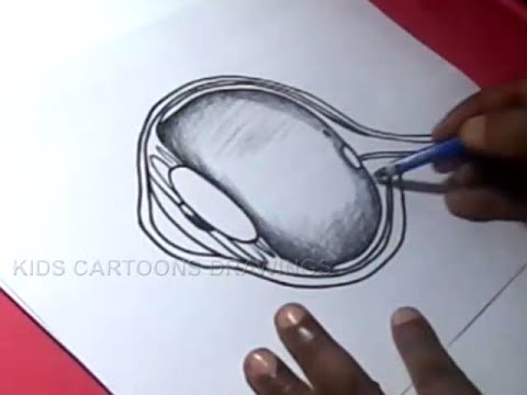 480x360 How To Draw Human Eye Anatomy Detailed Drawing For Kids