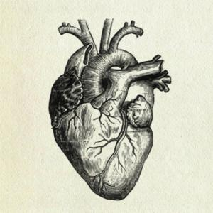 300x300 A Labeled Diagram Of The Human Heart General Center