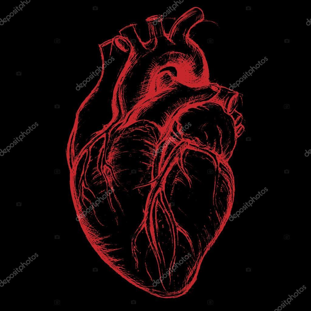 1024x1024 Human Heart Drawing Line Work Stock Vector 13ug13th