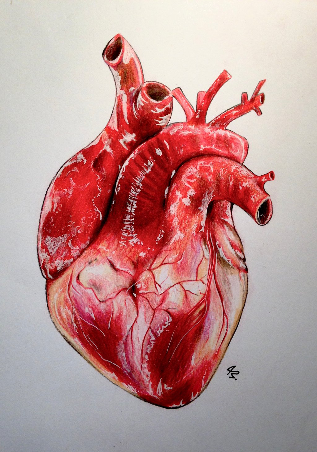 1024x1461 Realistic Human Heart By Lunacanan T H E A R T S