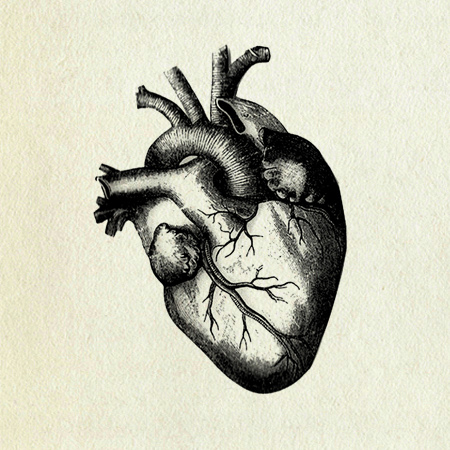 450x450 Human Heart Drawing Human Heart