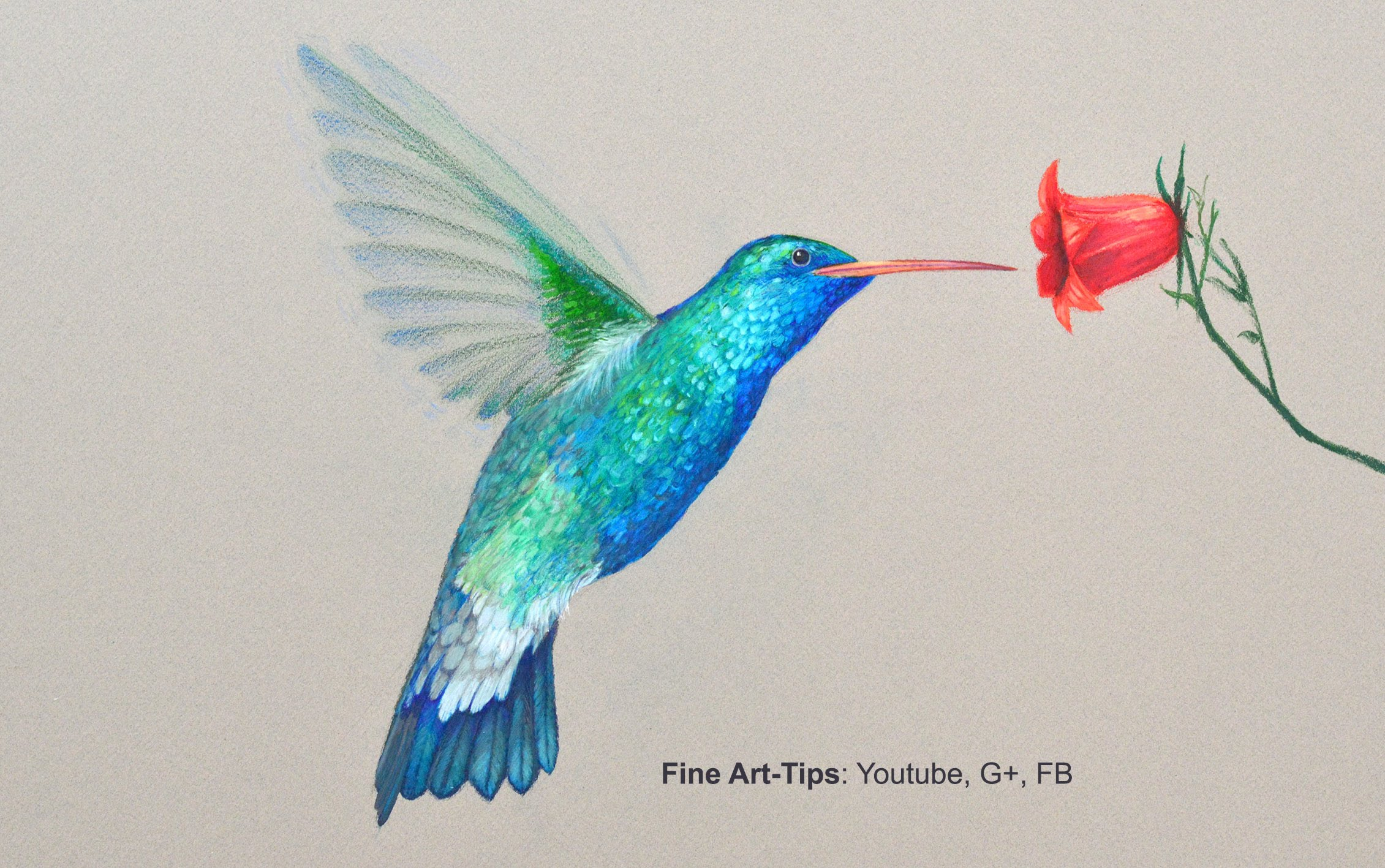 2261x1417 How To Draw A Hummingbird